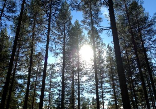 Rena_jakt_skogsfugl