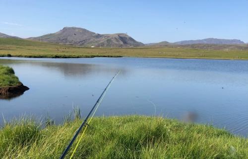 Ørretfiske på Island
